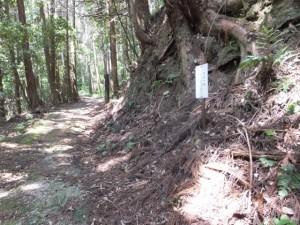 荷車の轍跡が残る岩