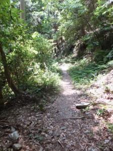 道幅が一気に狭くなる山道(水飲み場跡から石積みへ)