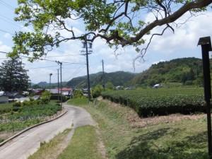 「大神宮寺相鹿瀬寺跡」の説明板からの風景