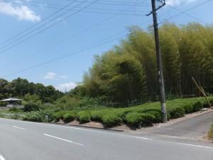まんじゅう屋跡の竹やぶ