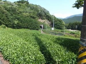 JR紀勢本線とトンネルと茶畑