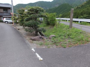 「近畿自然歩道・・」の道標