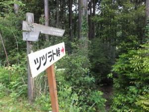 ツヅラト峠への歩行者用道、林道から森の中へ