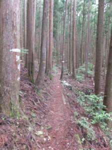 ツヅラト峠への歩行者用道、森の中
