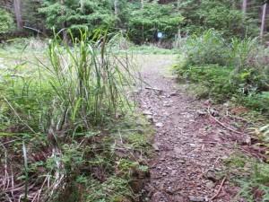 ツヅラト峠への歩行者用道、森から少し開けた空間へ