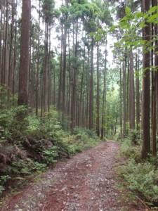 ツヅラト峠への歩行者用道、開けた空間から林道へ