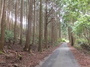 高野橋(栃古川)へ