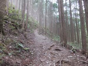 登口~ツヅラト峠