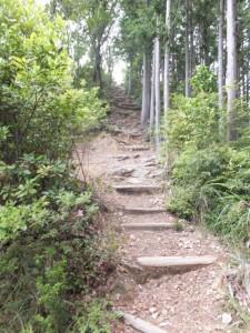 ツヅラト峠から見晴台へ