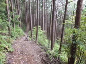 ツヅラト峠~志子登り口