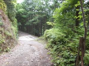 「ツヅラト石道登り口」付近から林道へ