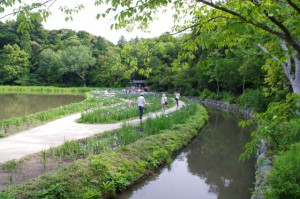 勾玉池のハナショウブ(外宮)