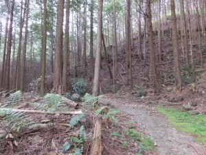 登り口(加田側)~一石峠