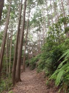 道瀬登り口~三浦峠