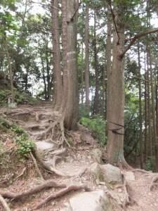 馬越峠から天狗倉山へ