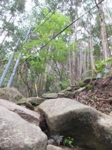 天狗倉山頂への北道