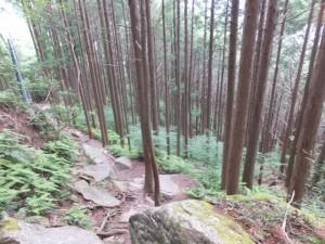 天狗倉山頂への北道(振り向いて来た道を・・)