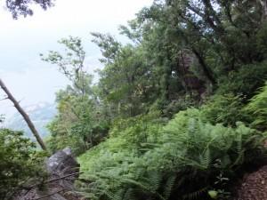 天狗倉山頂からの南道