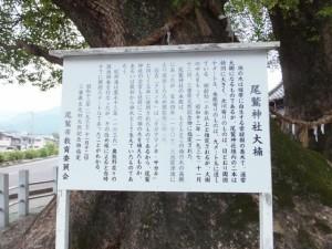 尾鷲神社大楠(夫婦楠)の説明板