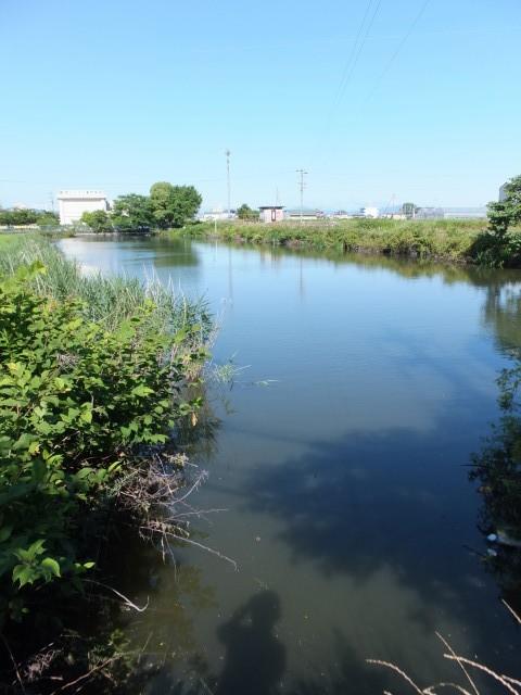 勢京ビジネス専門学校付近の池 (2013年06月16日時点)