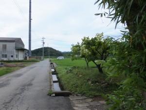 加努弥神社付近から望む朝熊神社の社叢