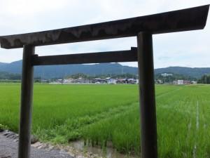 加努弥神社の前に広がる水田
