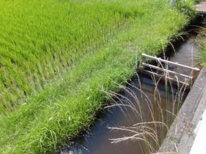 国道42号沿いの水路、水田(JR参宮線 松下駅付近)