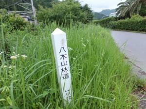 八木山林道の杭