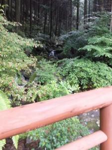 沢に架かる橋からの一枚(熊野古道 九鬼山道)