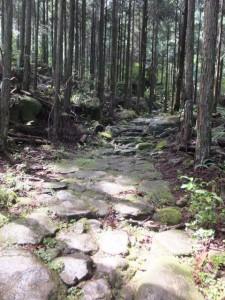 林道との合流点から七曲がりへ(八鬼山道)