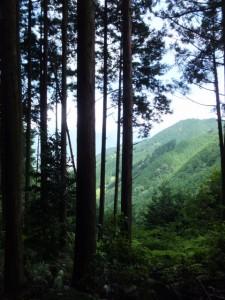 七曲がりからの風景(八鬼山道)