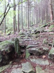 桜茶屋一里塚から蓮華石・烏帽子石へ(八鬼山道)