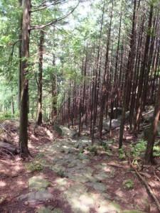 九木峠付近から振り返って望む登って来た山道