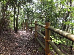 桜の森広場から十五郎茶屋跡へ(八鬼山道 江戸道)