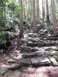 十五郎茶屋跡から籠立場へ(八鬼山道 江戸道)の途中で振り向いて