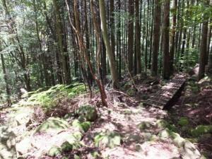 十五郎茶屋跡から籠立場へ(八鬼山道 江戸道)