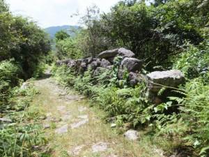 猪垣(名柄一里塚から三木里海岸に向かって)