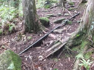 山道に浮き出た落石防護柵固定ワイヤーロープ(ヨコネ道)