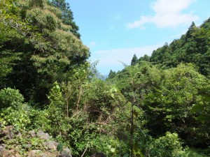 賀田湾方向の風景(「しんこんばし」から山の神へ)