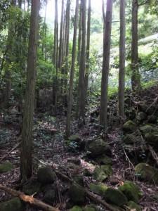 右上に見えるガードレール(山の神から羽後峠へ)