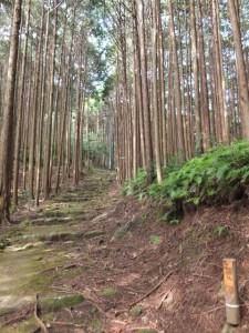 「伊勢路09 曽根次郎坂太郎坂 07/39 」道標付近