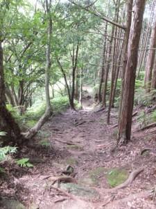楯見ヶ丘~猪垣記念碑(曽根次郎坂太郎坂)