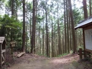 逢神坂峠から新鹿方向へ(二木島峠逢神坂峠道)