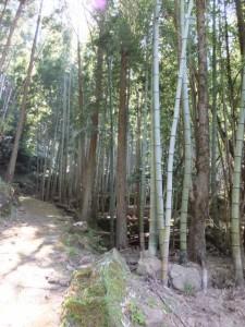 竹林が続く大吹峠道