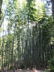 竹林が続く大吹峠