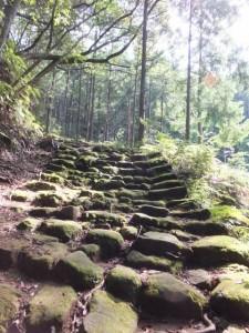 大泊登り口から松本峠へ