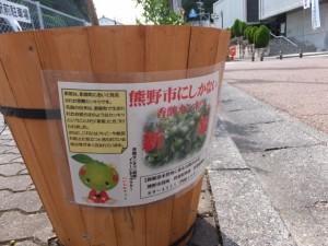 JR紀勢本線 熊野市駅前からの通りに列べられた香酸カンキツ 新姫(にいひめ)