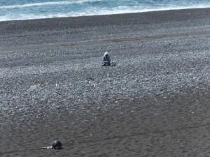 防波堤から望む七里御浜