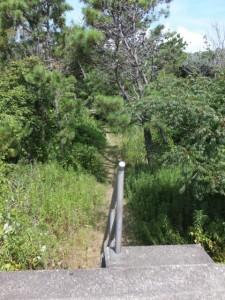 七里御浜の防波堤から雑木林の散策道への階段