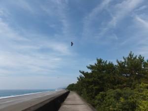 七里御浜の防波堤を志原橋へ向かい